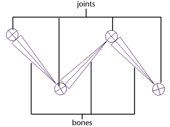 Joints and bones rigging Maya